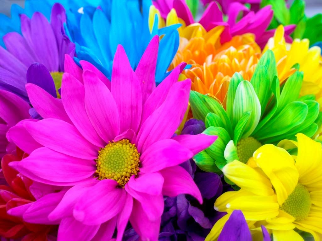 Which flowers to be used to worship God and Pooja?