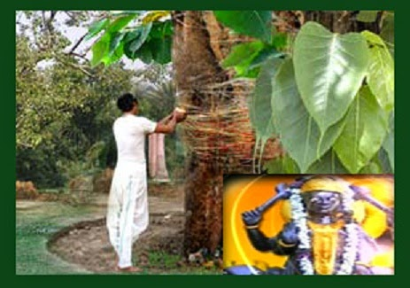 Astrology Connection of Shani Dev and Peepal Tree