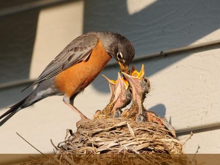 Feeding Animals/Bird